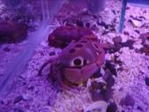 螃蟹博物館+傳藝中心:紅斑瓢蟹