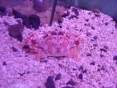 螃蟹博物館+傳藝中心:鏽斑鱘