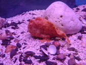 螃蟹博物館+傳藝中心:躄魚